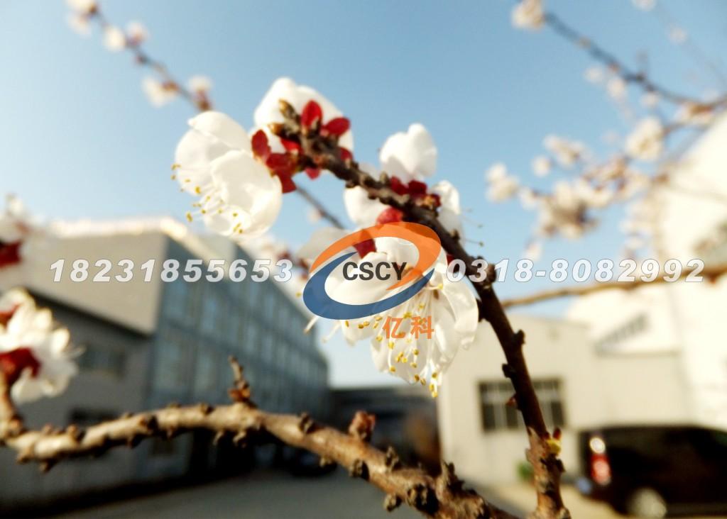 河北亿科金属制品有限公司厂区的桃花